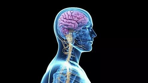 Как нами управляет мозг