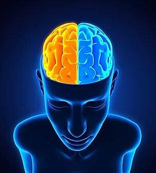 Сознательные и бессознательные процессы принадлежат разным полушариям